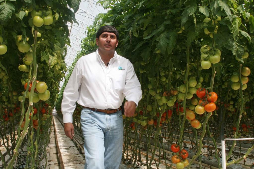 Presidente de la Asociación Mexicana de Horticultura Protegida A.C. (AMHPAC)
