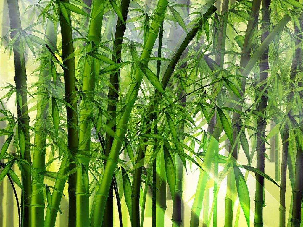 Bambú, solución para la deforestación que sufre África - Tierra ...